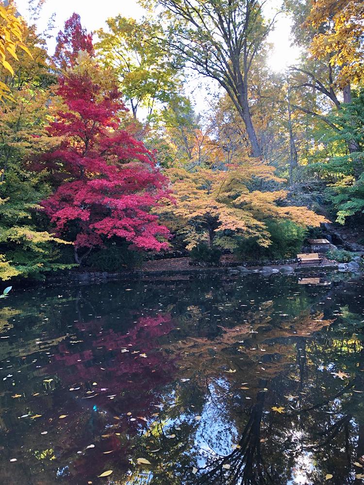 Autumn in Lithia Park © Cori Solomon