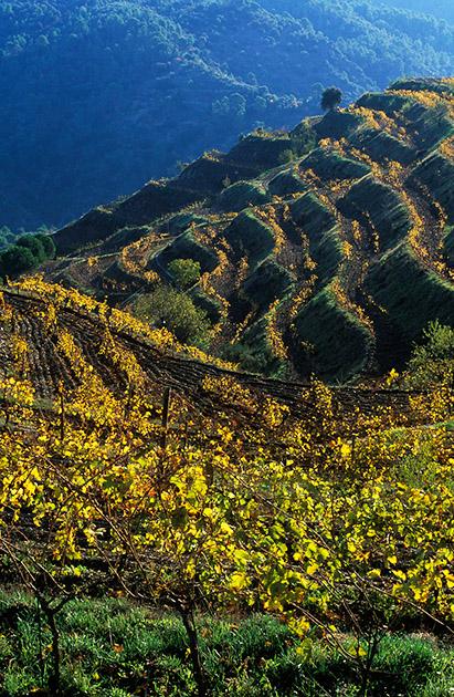 Vinyes de Clos Mogador, DOQ PrioratGratallops, Priorat, Tarragona