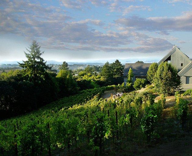 Halleck Vineyard Sebastopol Winery © Mark Wegner