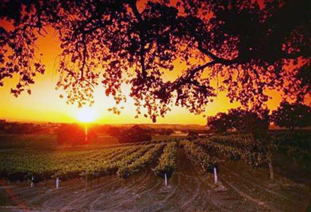 Plummer Vineyard Paso Robles