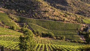 Apalta Colchagua Valley Vineyard (c) Viñedos Veramonte