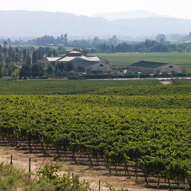 Ritual Wines Vineyard Casablanca Valley