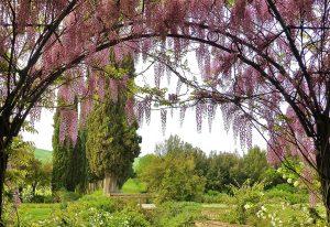 Col d'Orcia Gardens