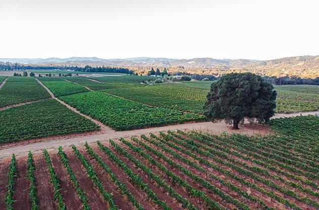Redwood Valley Vineyards