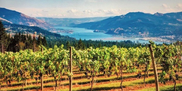 Columbia Gorge AVA (C) David Lloyd - Oregon Wine Board
