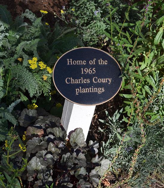 First Plantings at David Hill Vineyards