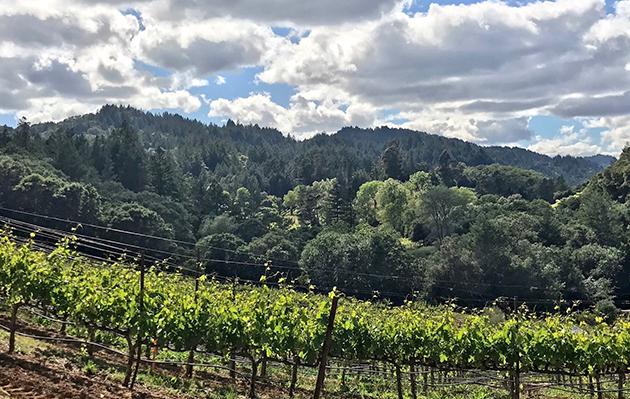 Flambeaux Estate Vineyards Dry Creek Valley
