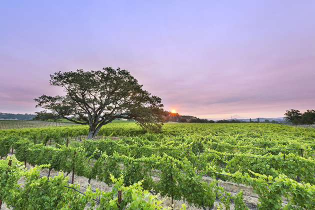 Oregon Wine Month - Rogue Valley Vineyards (C) Travel Medford