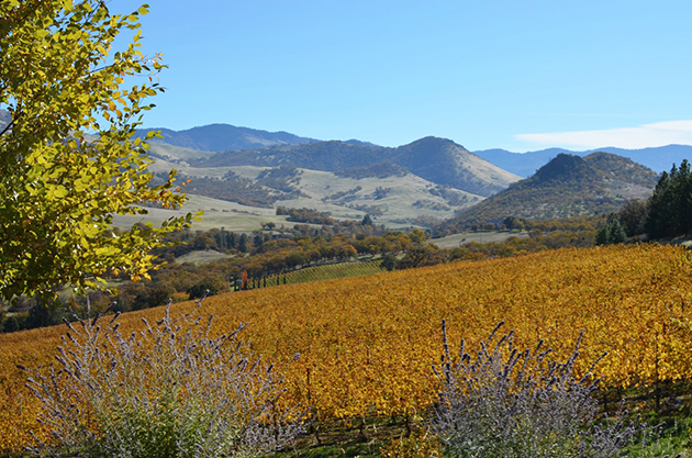 Oregon Wine Month - Rogue Valley AVA