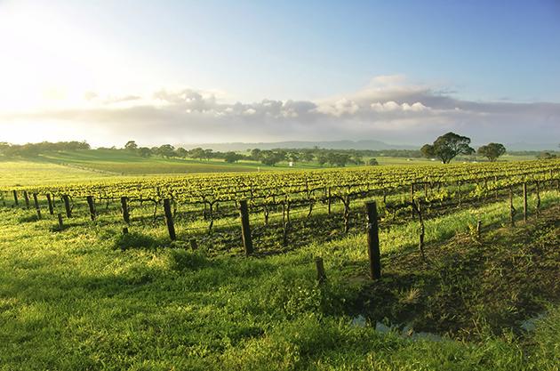 Aridus Vineyards Wilcox (C) Aridus Wine Co