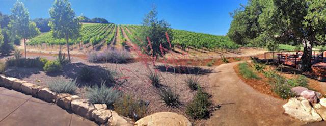 Sixmilebridge Vineyards