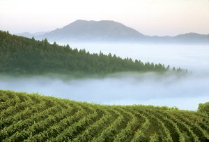 Spring Mountain District Above the Fog © Smith-Madrone