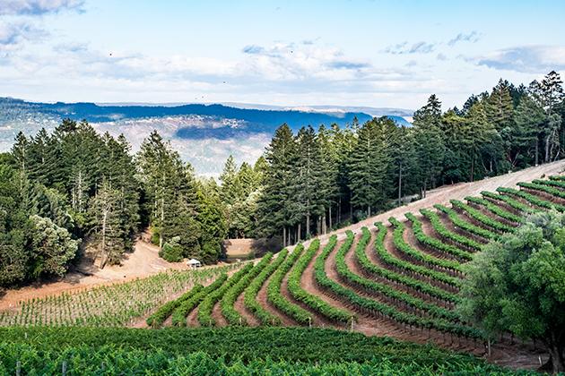 Smith-Madrone Vineyards - Spring Mountain District © Matthew Denny