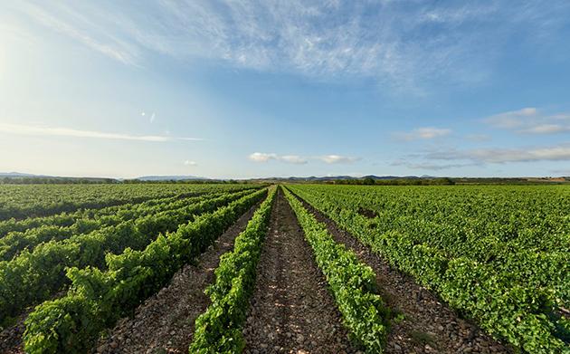 La Rioja Alta Vineyards ©La Rioja Alta