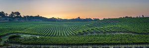 Enriquez Estate Winery Vineyard
