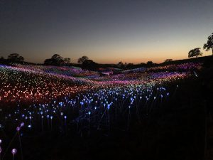 Sensario Field of Lights @Cori Solomon