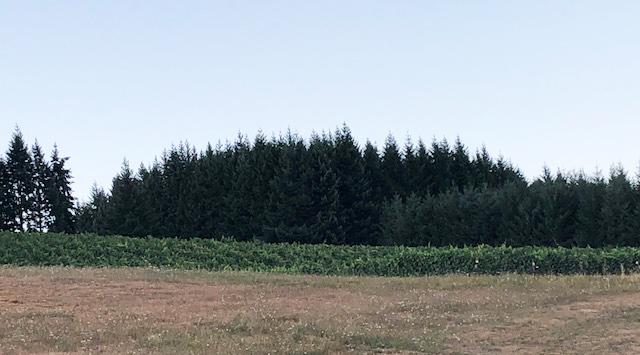 Pfeiffer Vineyards
