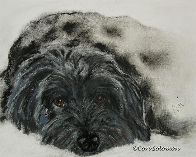 Wine and Dogs Asia - Mixed Breed Dog © Cori Solomon
