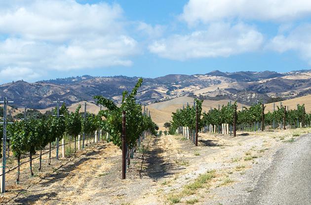 Star Lane Vineyard View